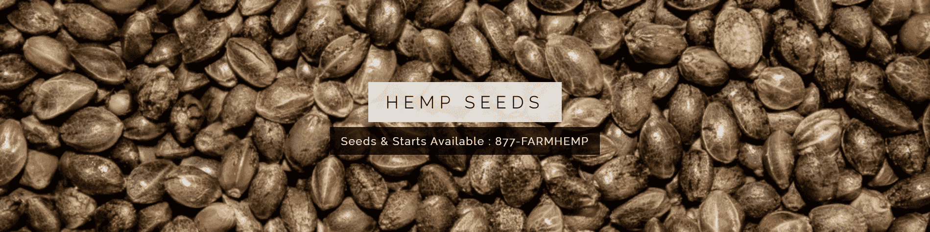 banner with feminized hemp seeds