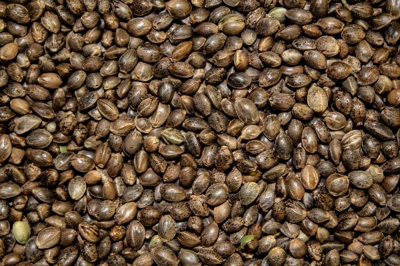 picture of brown hemp seeds