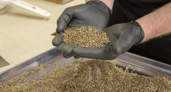 iHEMPx Hemp Seeds and Genetics in hands